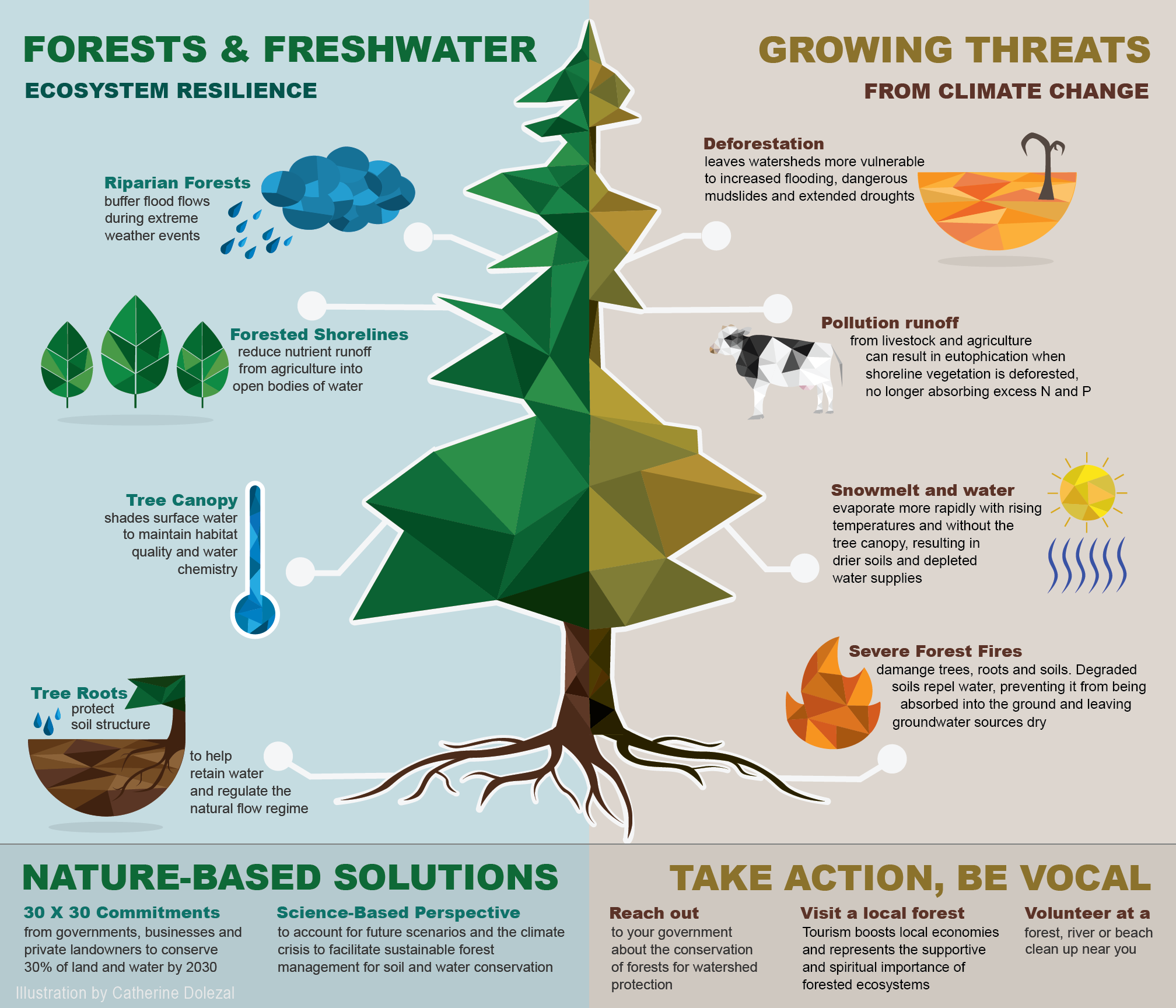 Infographic showing how forests and fresh-water ecosystems are related to global environmental threats.